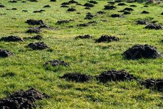 Muldvarpeskud bekæmplse af muldvarper Ring 31 90 40 21